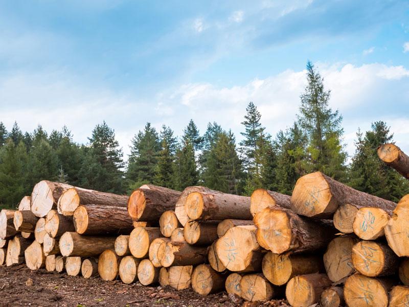 Stadt Mengen Brennholzverkauf